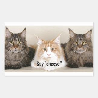 """Studio-Foto - 3 Katzen-Sprichwort """"Käse """" Rechteckiger Aufkleber"""
