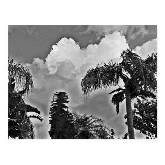 Stürmische Palmen Postkarte