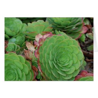 Succulents (freier Raum) Karte