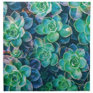 Succulents, Succulent, Kaktus, Kakteen, Grün, Serviette
