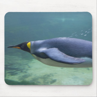 Südafrika, Cape Town. Zwei Ozean-Aquarium Mauspads