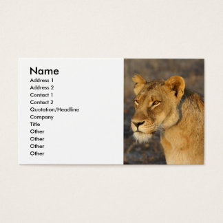 Südafrikanischer Löwe Visitenkarten
