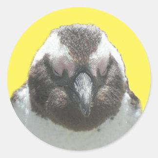 Südafrikanischer Pinguin-Gesichts-Aufkleber Runder Aufkleber