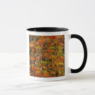 Sumac Baum in der Herbstfarbe in der Maräne, Tasse