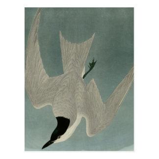 Sumpf-Seeschwalbe Postkarte