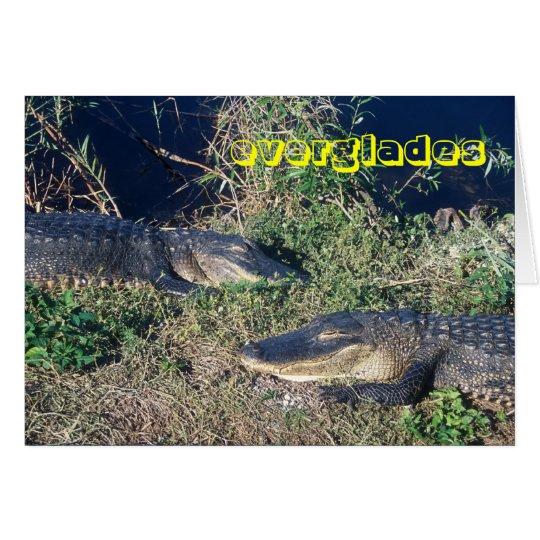 Sumpfgebiet-Nationalpark-Alligatoren an der Grußkarte