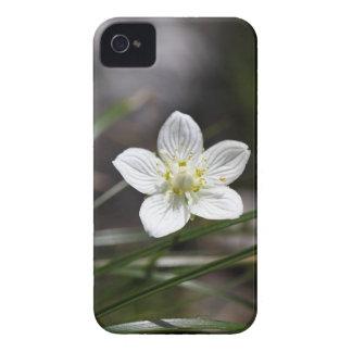 Sumpfgras von Parnassus (Parnassia palustris) iPhone 4 Case-Mate Hülle