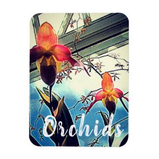 Sunlit Orchideen-Foto-Magnet Magnet