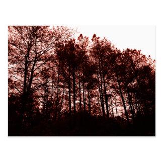 Surrealer hochroter Wald Postkarte