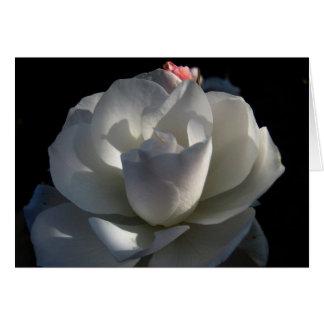 Susans Rose Karte