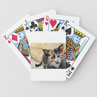 Süße Miezekatze, die SIE betrachtet Bicycle Spielkarten