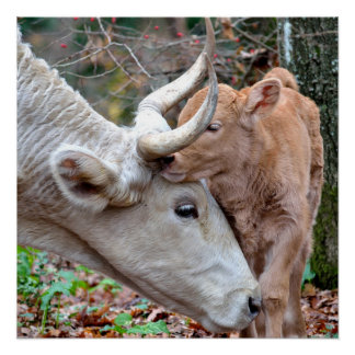 Süße Mutter-Kuh u. Kalb im Herbst-Plakat Poster