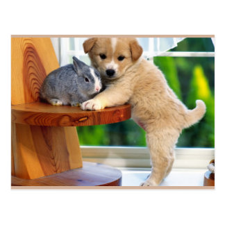 Süße Tiere Postkarte
