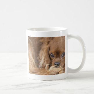 Süßer karminroter unbekümmerter Königcharles Kaffeetasse