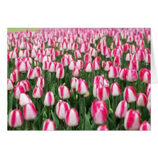 Süßigkeits-Streifen-Tulpen Karte