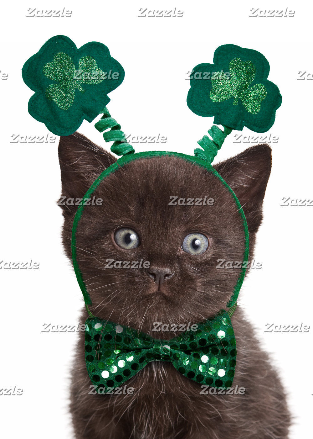 Shamrock Kitten Cards & Gifts