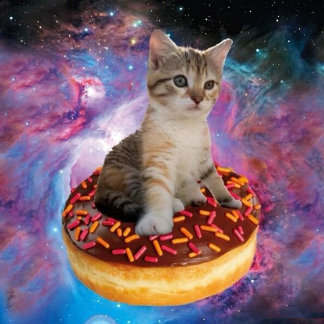 Donut cat-cat space-kitty-cute cats-pet-feline