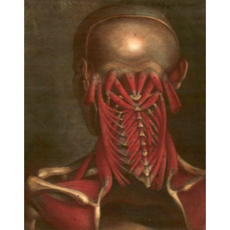 Vintage Anatomy | Neck and Shoulders II