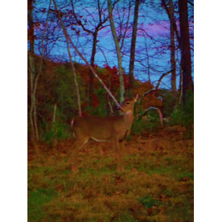 A Colorful Deer at Sunset