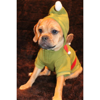 Puggle Christmas Cards!