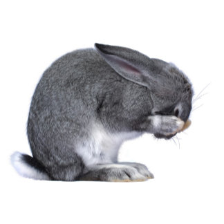Despairing Rabbit