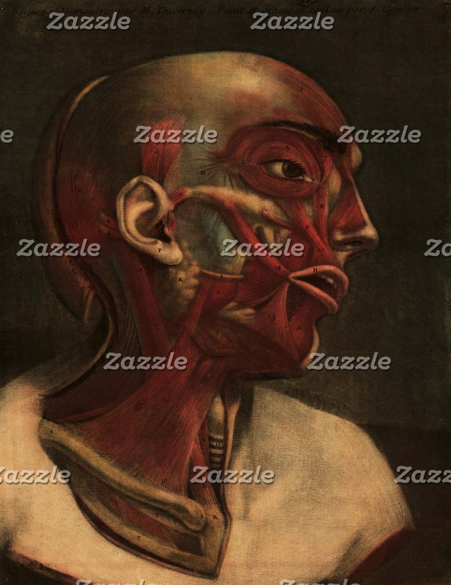 Vintage Anatomy Illustrations | Head