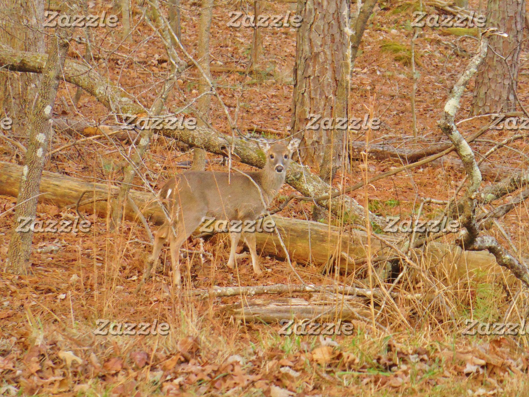 Baby Deer's First  winter