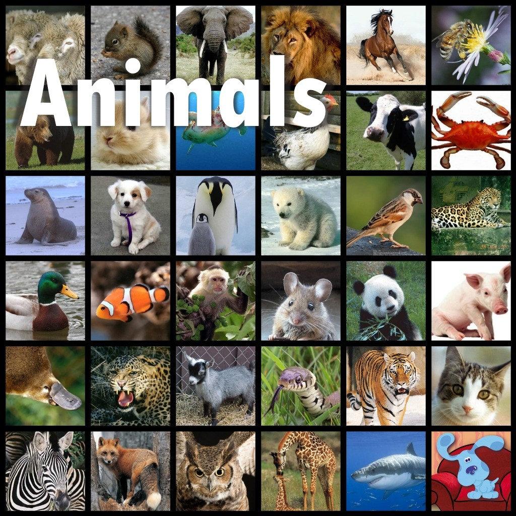 *ANIMALS, Cartoons