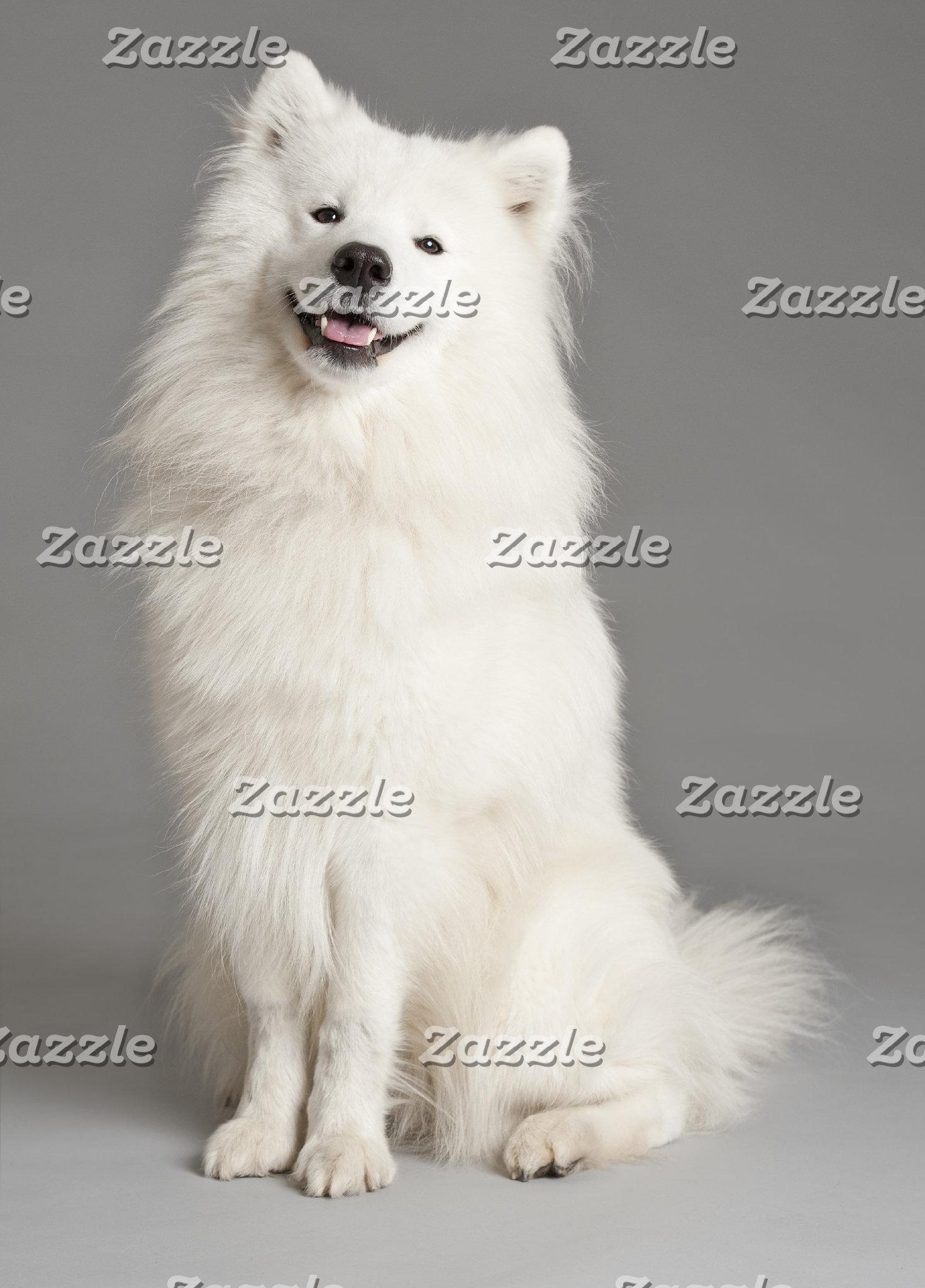 American Eskimo  (Eskies)