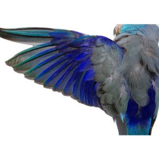 The Parrotlet Shop
