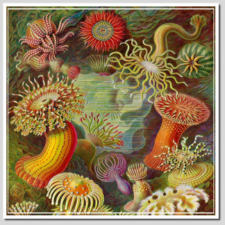 HAECKEL - ARTFORMS IN NATURE