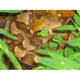 Herps - Reptiles and Amphibians