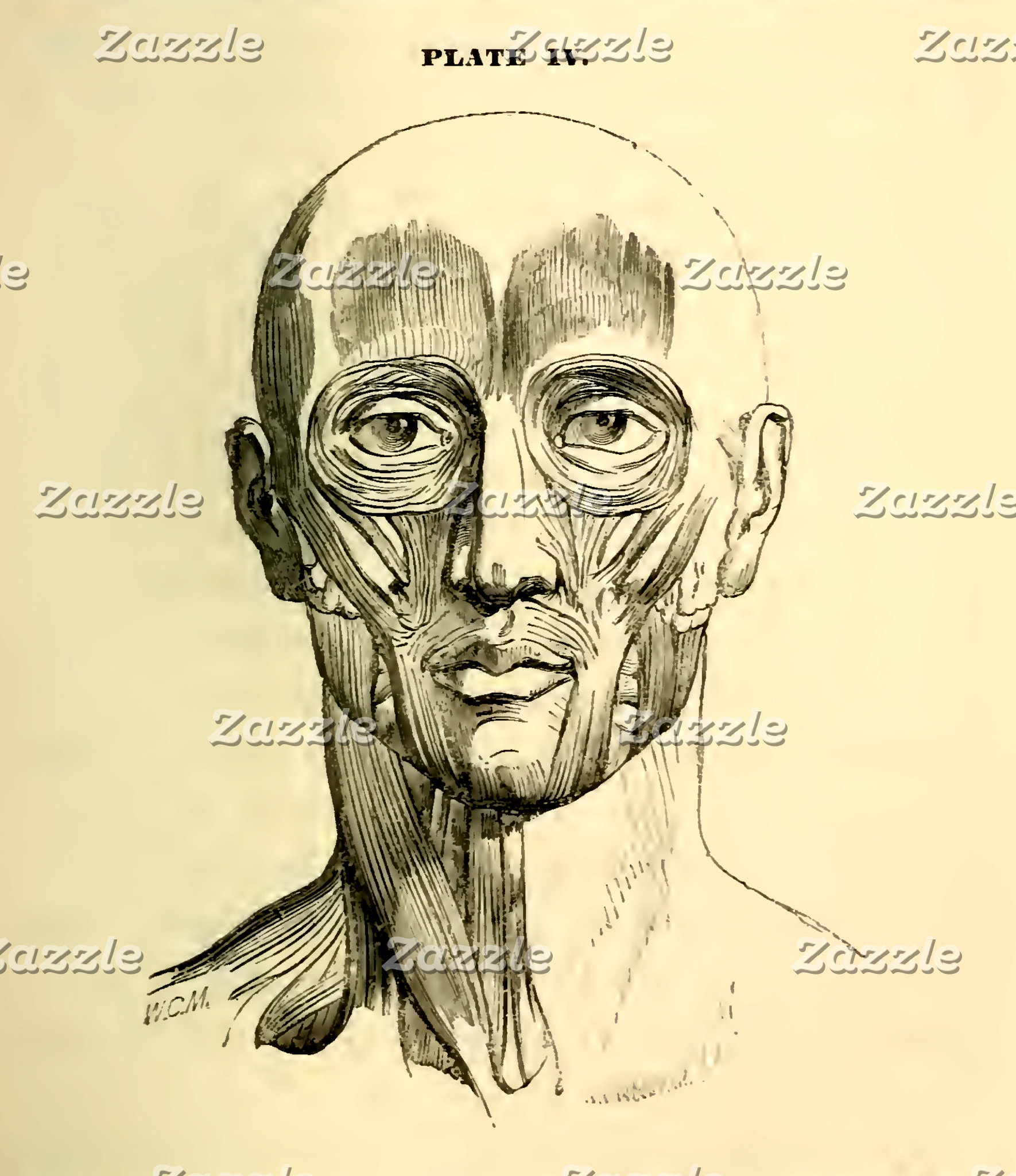 Vintage Anatomy | Muscles of the Face