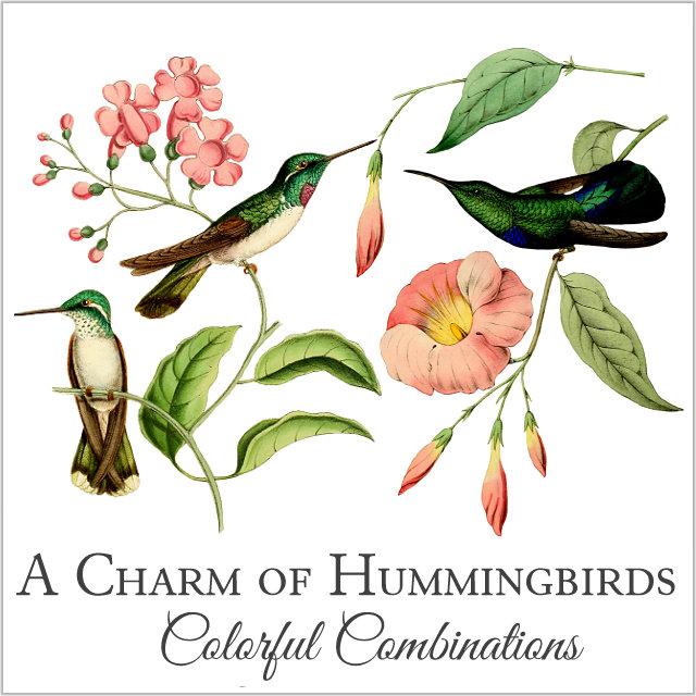 A Charm of Hummingbirds