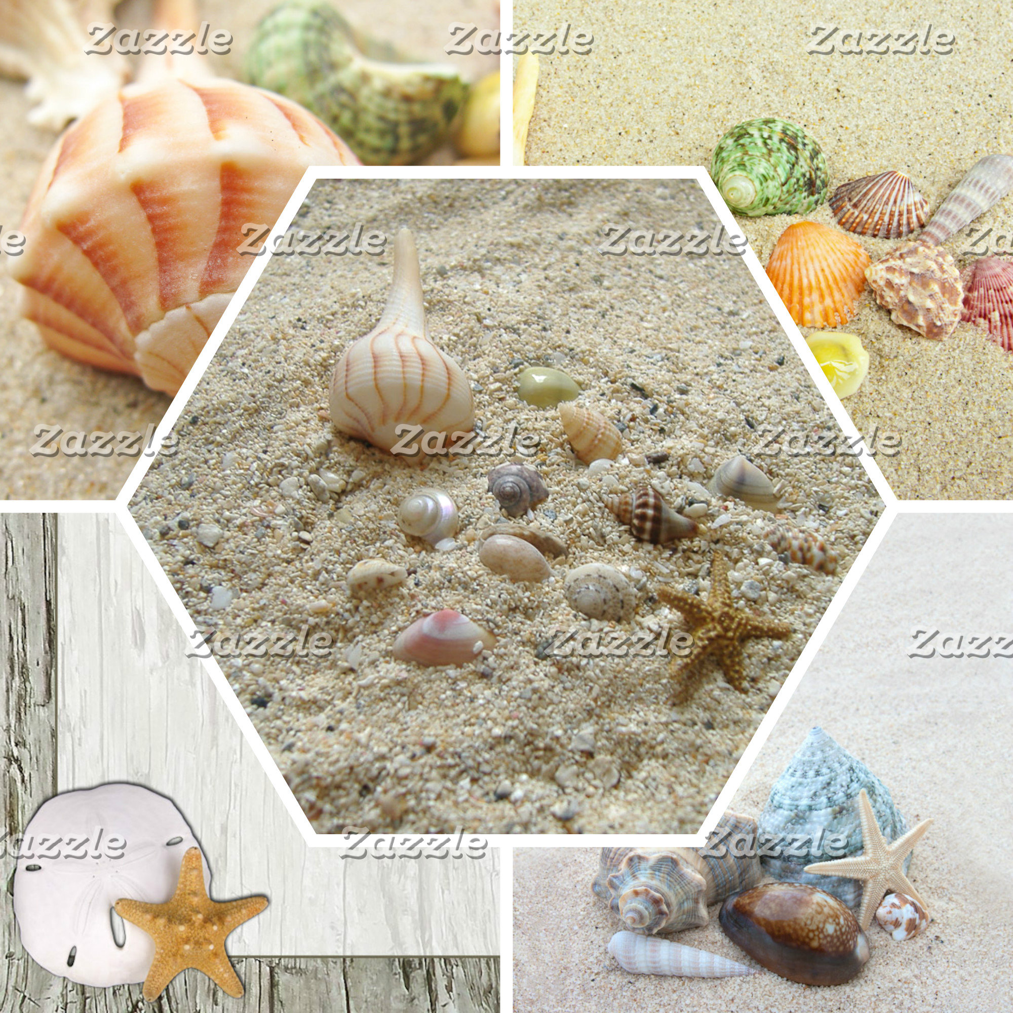 Seashells/ Nautical