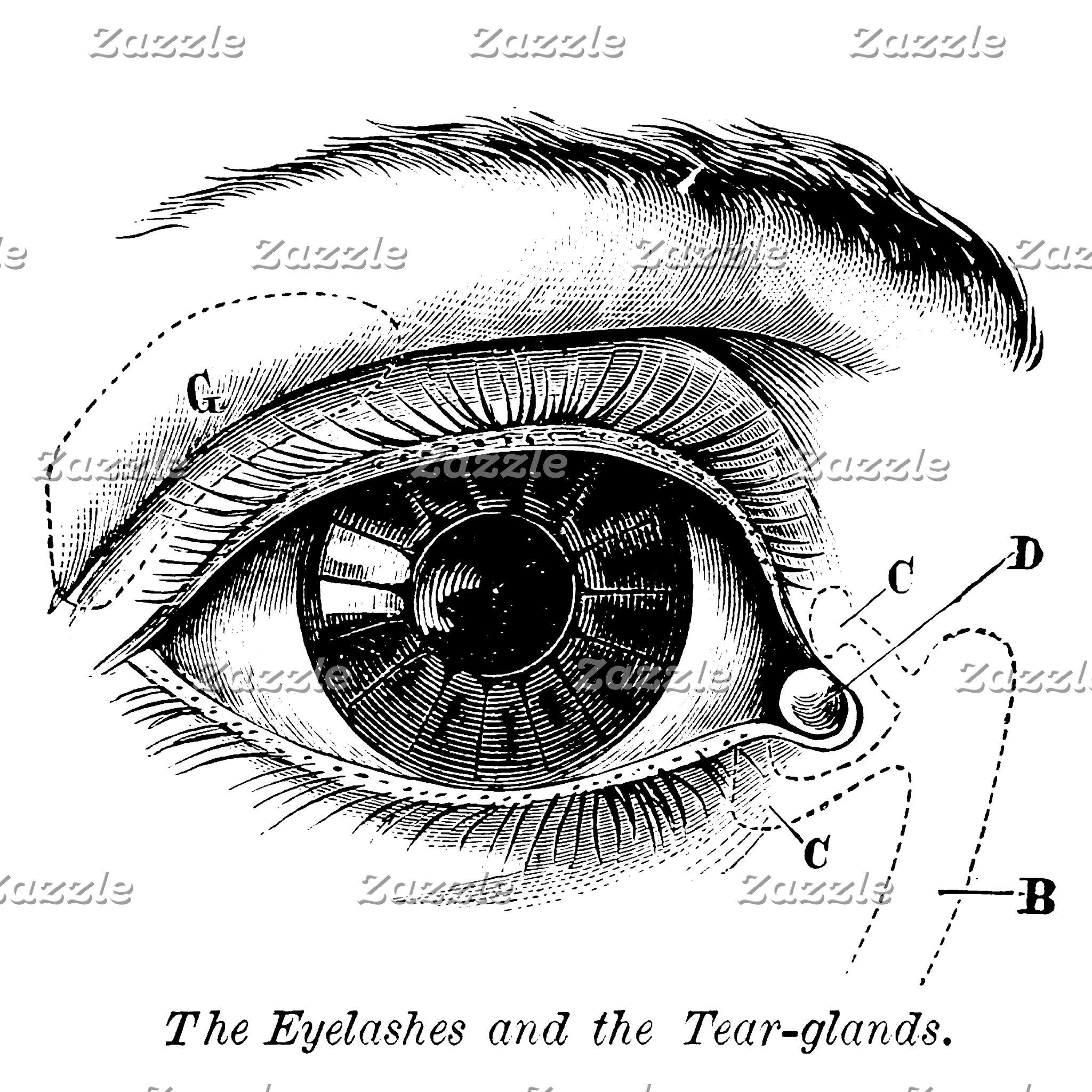 The Human Eye