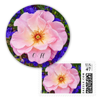 Beautiful Pink Rose Gifts, Stickers & Stamps