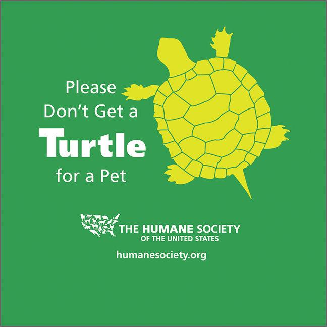 Turtles Aren't Pets