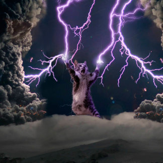 Lightning cat--kitty-pet-feline-pet cat -kittens