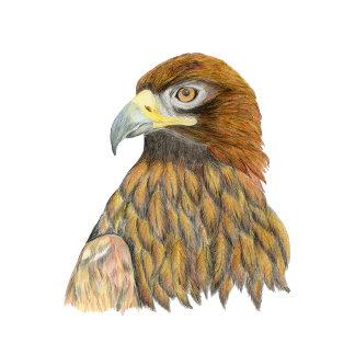 Golden Eagle Artwork