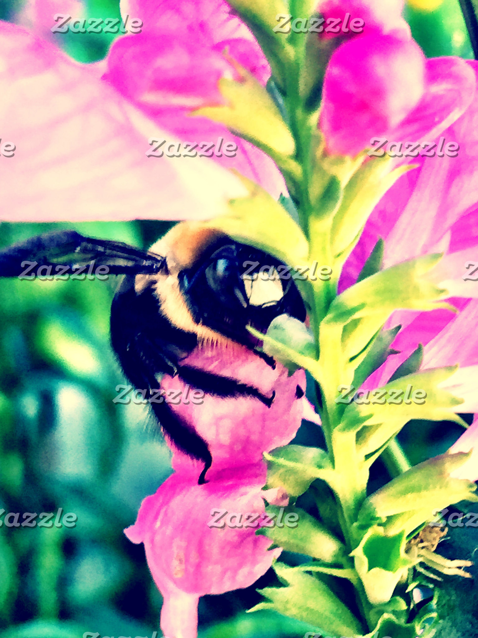 Bee's Eyes Collection