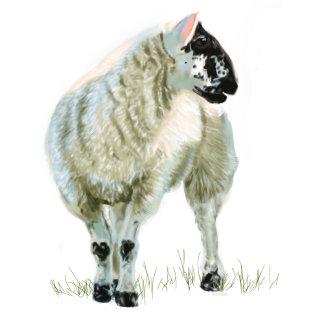 Wee Lamb