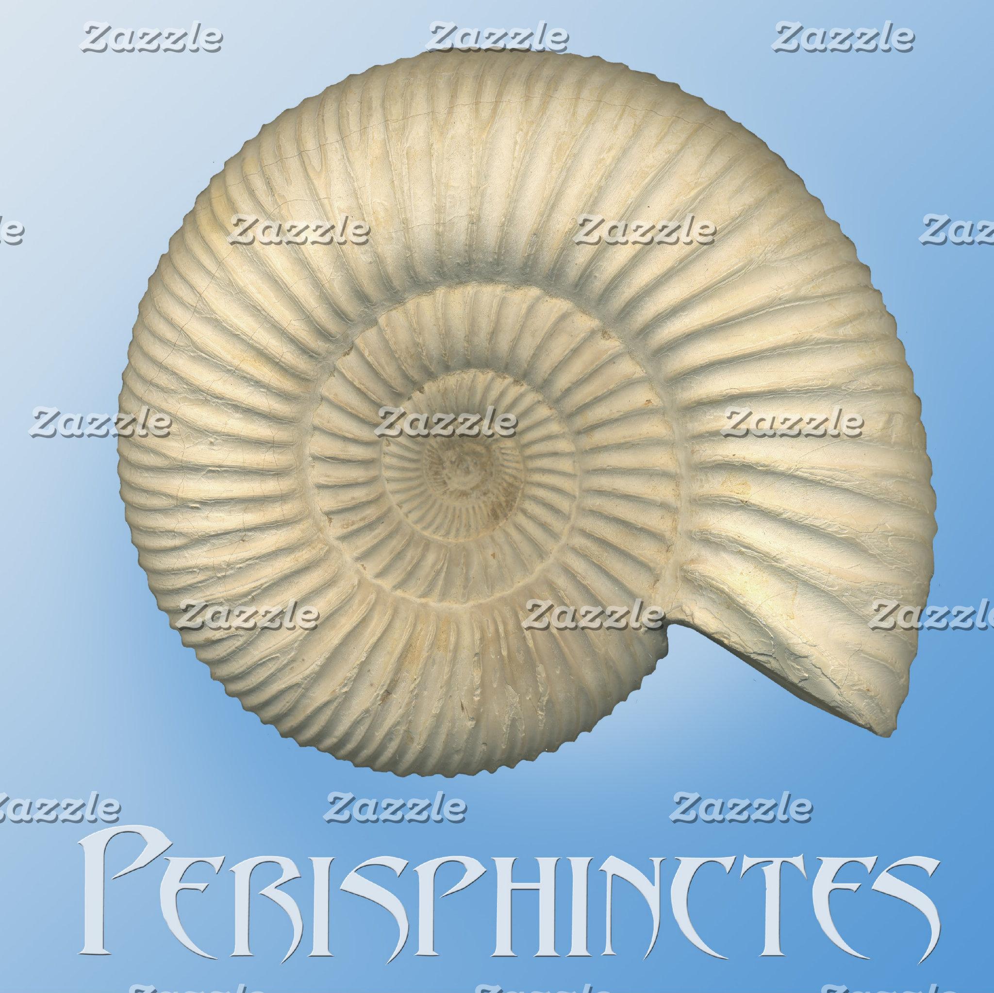 Perisphinctes Ammonite