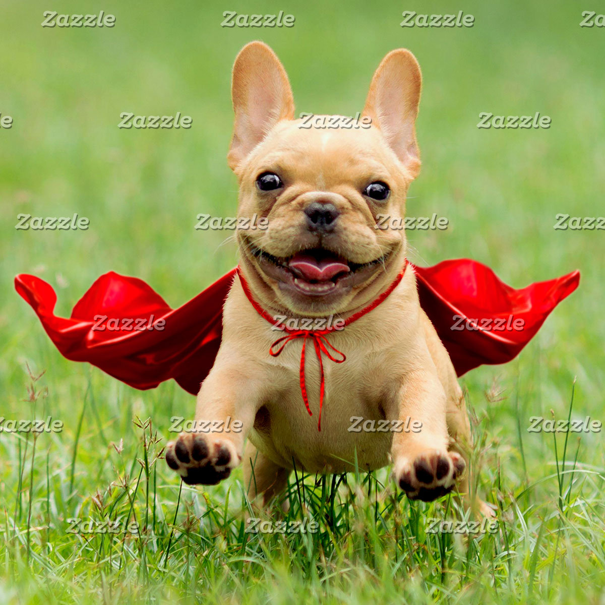 Cute French Bulldog Superhero Runs in Grass