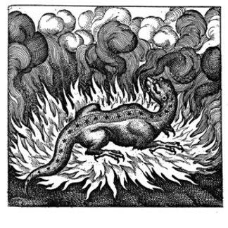 Burning Salamander