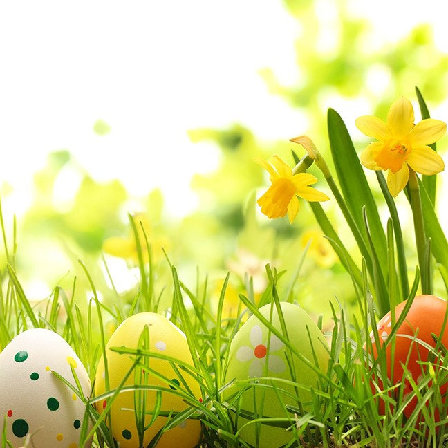 Easter Eggs Hiding in Grass with Daffodils