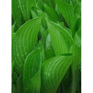 Plant Photos