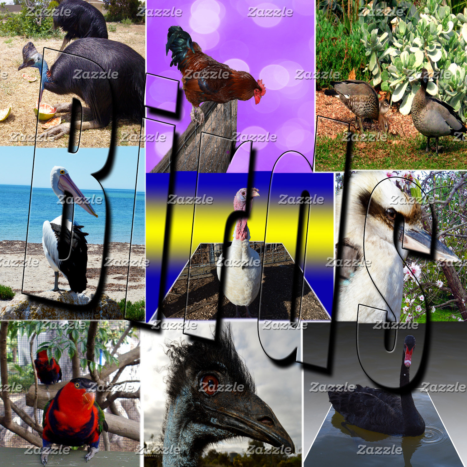 Birds, Emus, Chickens, Swan, Products