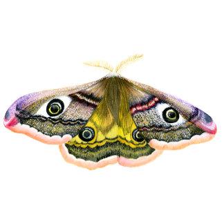 Emperor Hawk Moth Watercolour