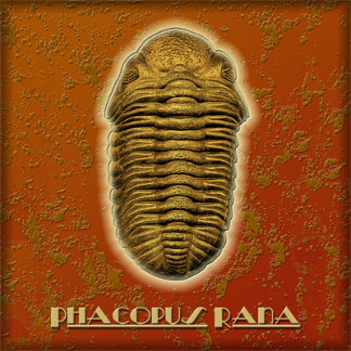 Phacops Rana Crassituberculata